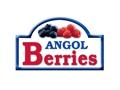 ANGOL BERRIES LTDA.